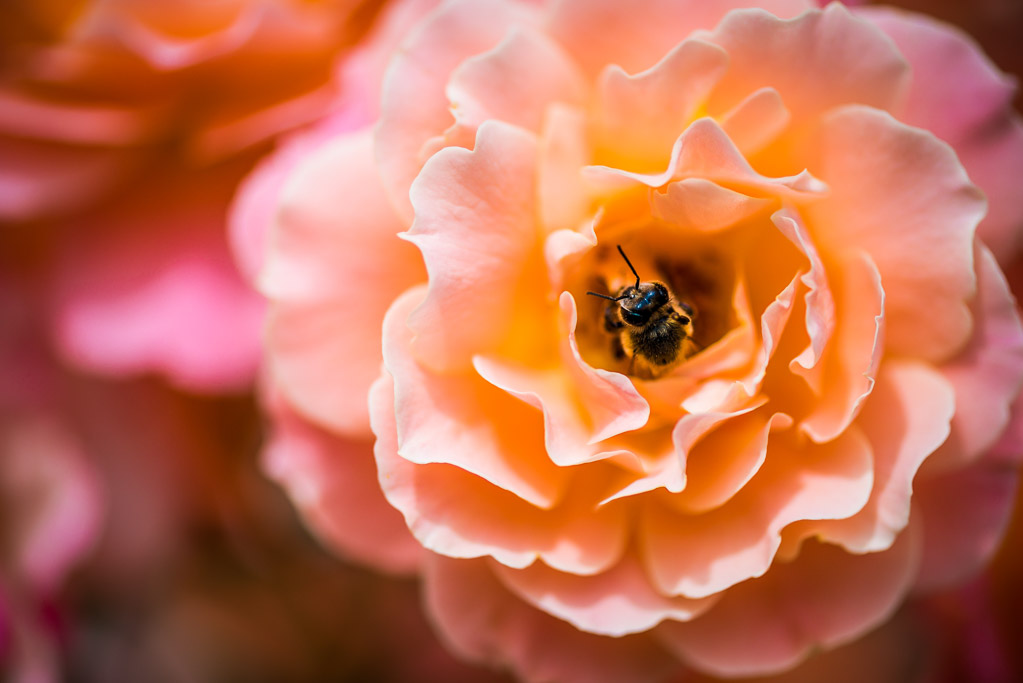 Flower with a bee